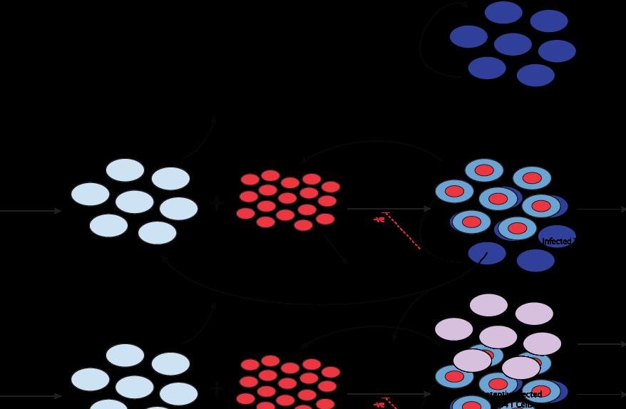 DOWNLOAD COLOR ATLAS OF MELANOCYTIC LESIONS