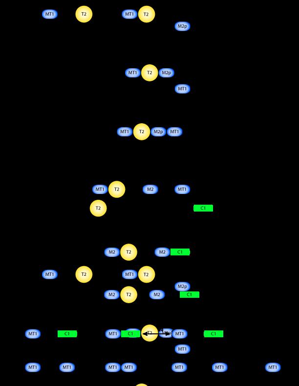 distinct modes of collagen type i proteolysis by matrix
