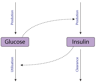 the relationship between insulin and glucose diagram