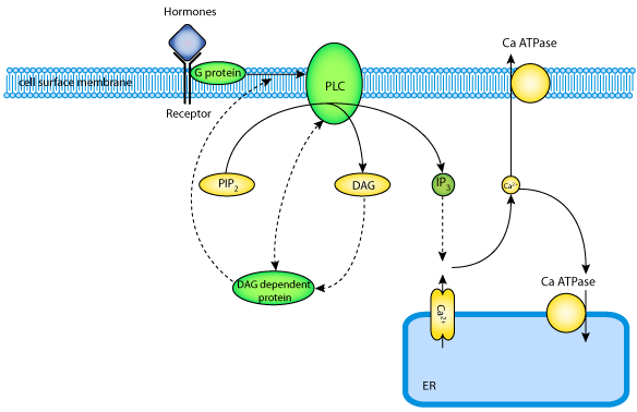 chay  lee  fan  1995  u2014 physiome model repository