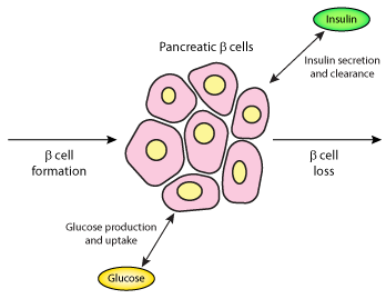 Gad Antibodies And Natural Remedies