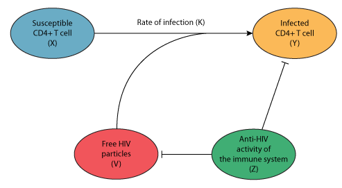 a model for aids pathogenesis physiome model repository rh models cellml org HIV AIDS Logo HIV AIDS Posters in Us