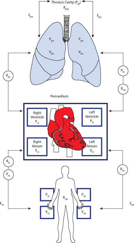 Modeling The Cardiovascular System Physiome Model Repository